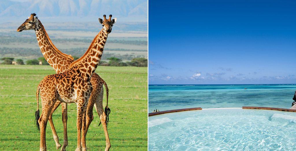tanzanie plage et safari photo