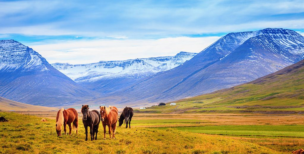 Discover the glorious landscapes of Iceland - Horses, Hotsprings and Northern Lights Reykjavik