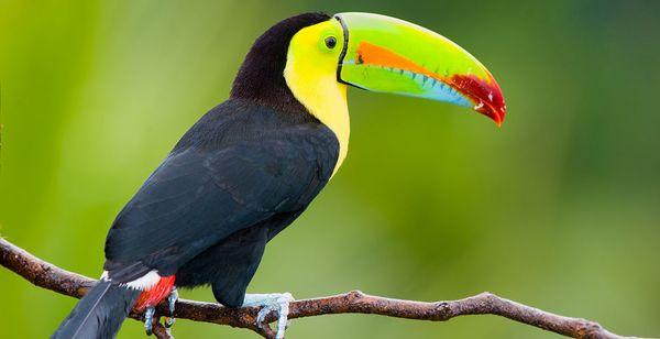 Autotour Découverte du Costa Rica et du Nicaragua en 9 ou 14 nuits