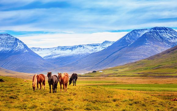 Icelandic Horseback Riding and Golden Circle Spa