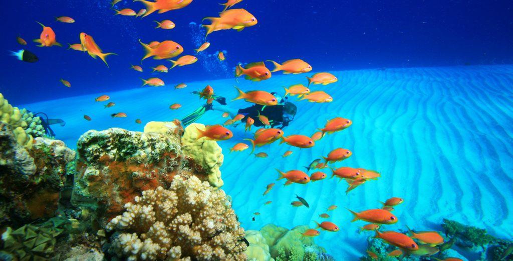 Annäherung an die Meerestiere von Marsa Alam