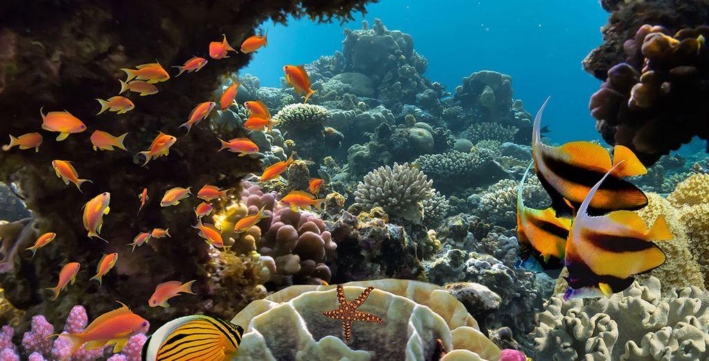 Entdecken Sie den Meeresboden Ägyptens