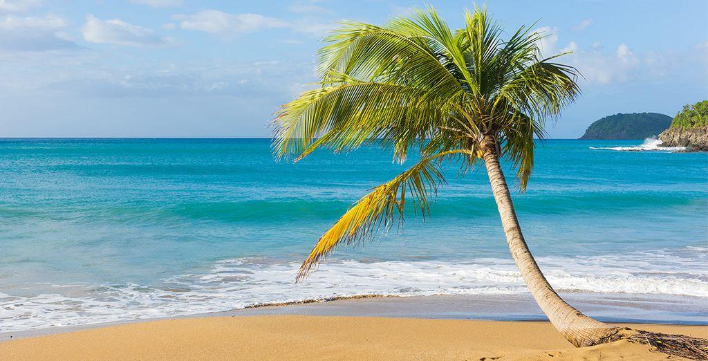 Und erkunden Sie die Vielfältigkeit Guadeloupes