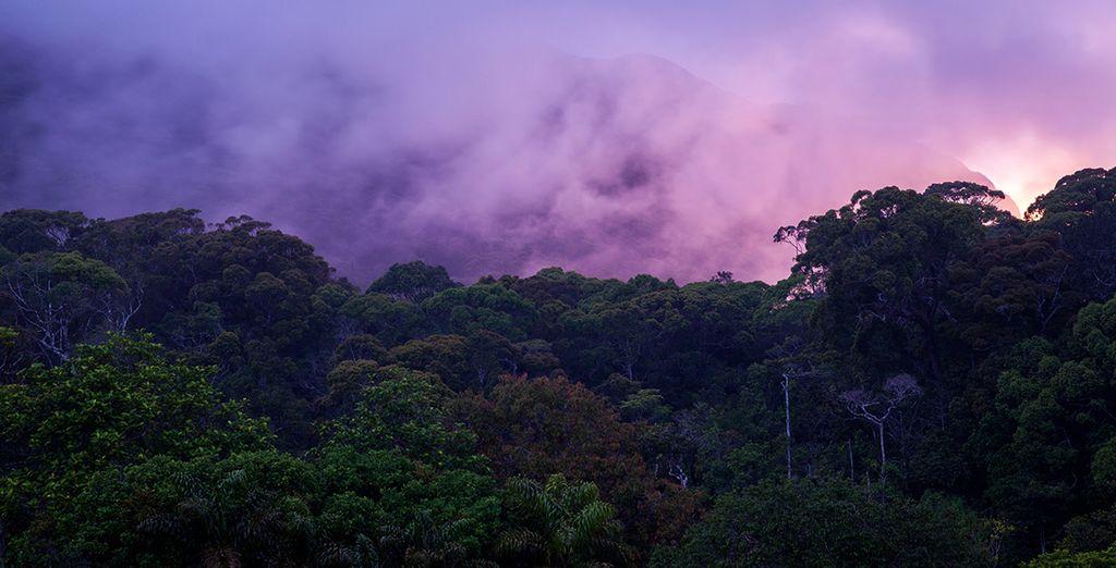 Genau wie der Besuch des Sinharaja Waldreservats