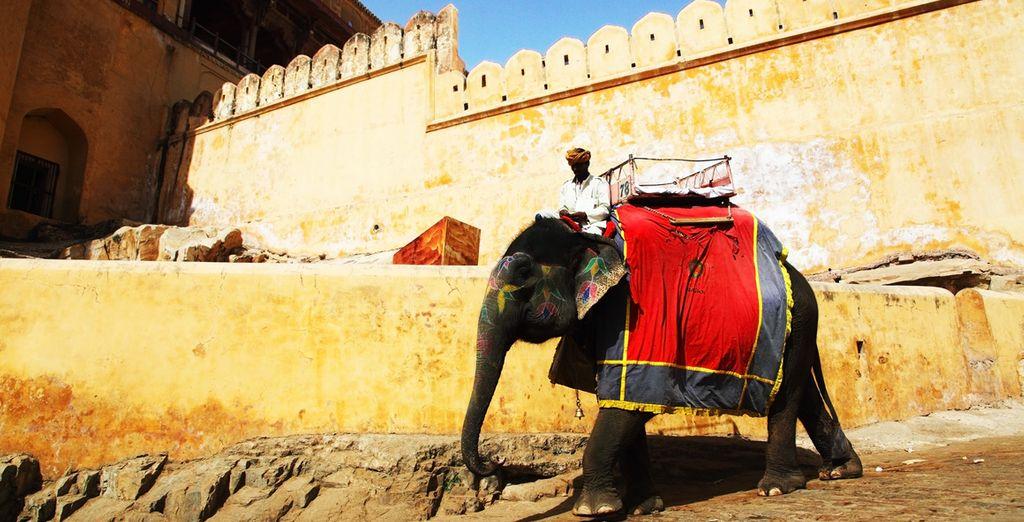 Auf einem Elefantenrücken...