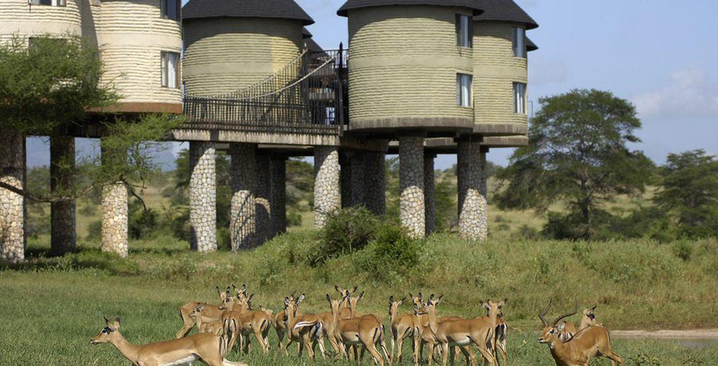 Sie werden in ideal platzierten Lodges übernachten
