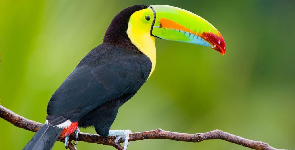 Vom ökologischen Paradies in Tortuguero