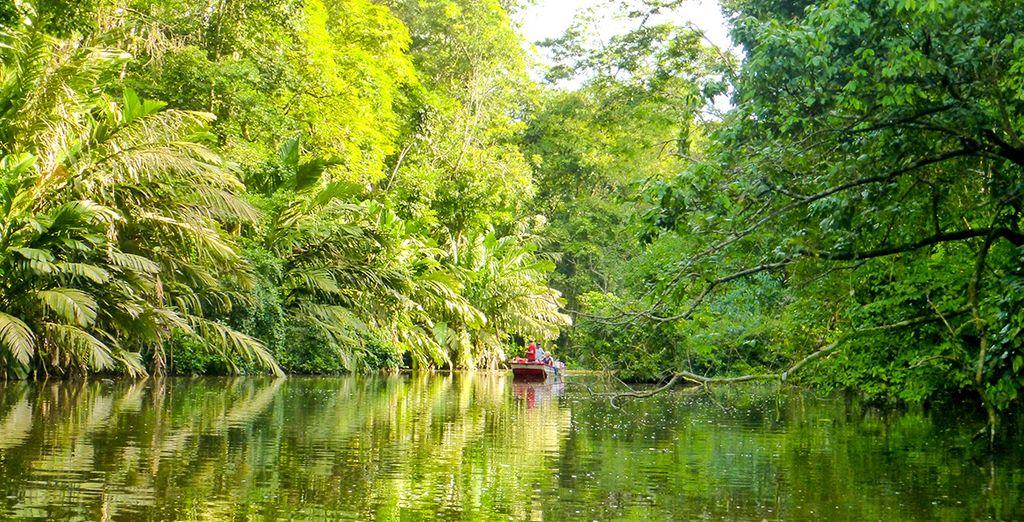 Ihre Reise beginnt im Naturparadies Tortuguero