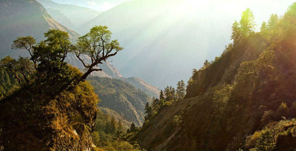 Die beeindruckende Vegetation Nepals