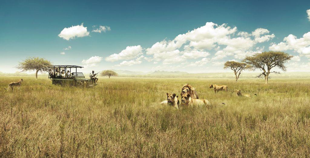 Autotour Südafrika und Namibia
