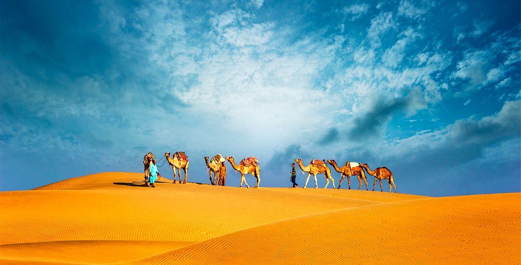 Machen Sie einen Kamelritt in der Dubaier Wüste.