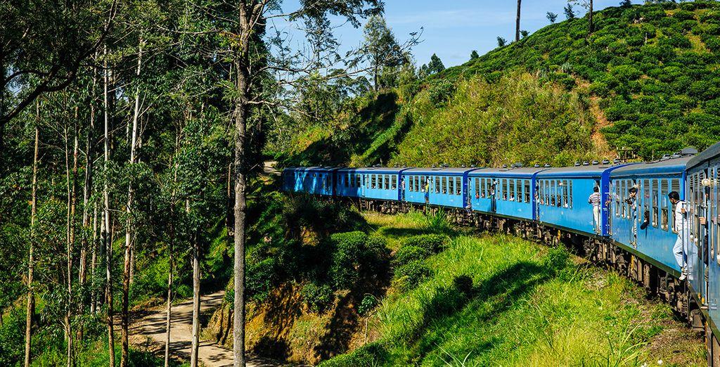 Reisen Sie mit dem Zug durch die Natur Sri Lankas.