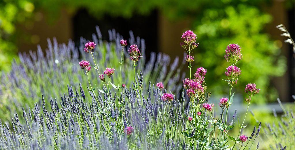 Und den Geruch des Lavendels genießen