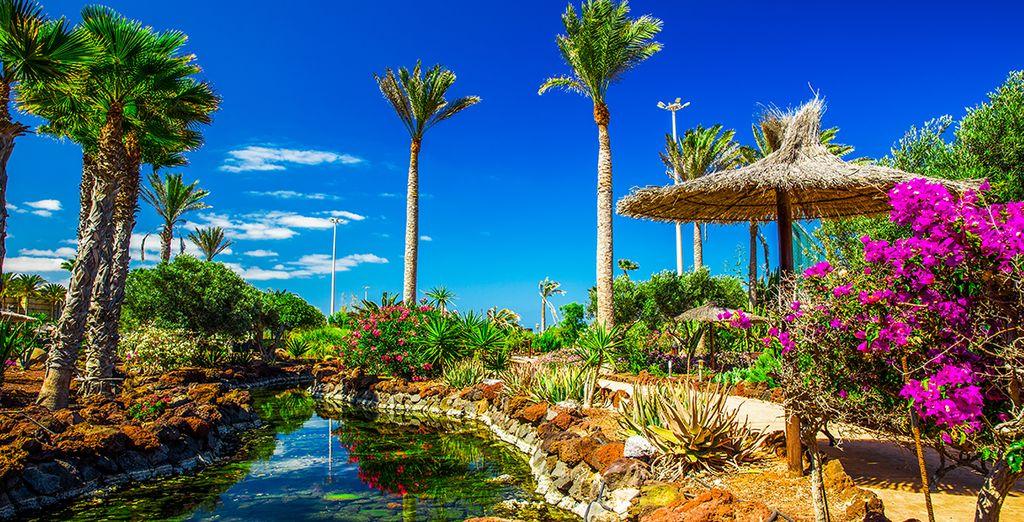 Las maravillas de Canarias te están esperando