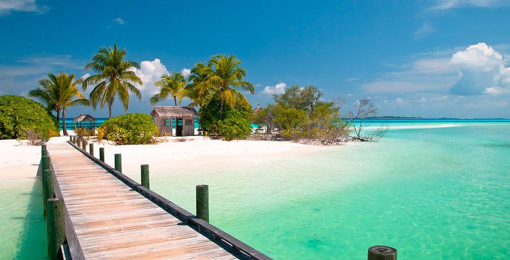 Bahamas le está esperando