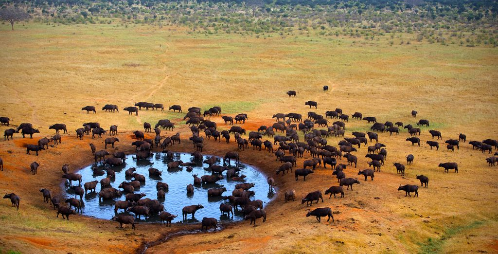 Es el parque más grande en el país reconocido por su rica vida animal y salvaje