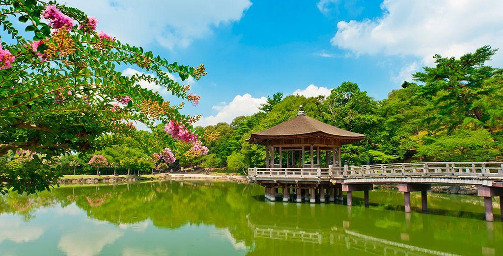 El Parque de Nara será tu próxima parada