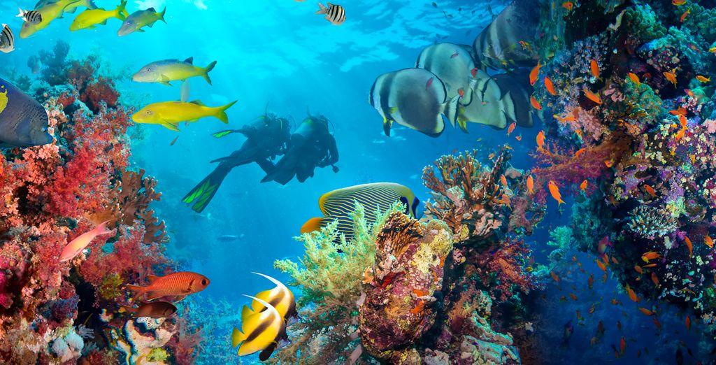Y admira la belleza del fondo marino