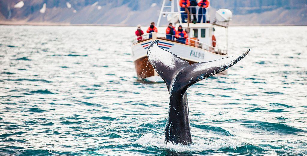 ...y una excursión de avistamiento de ballenas