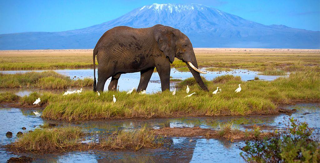 Amboseli y vistas a Kilimanjaro