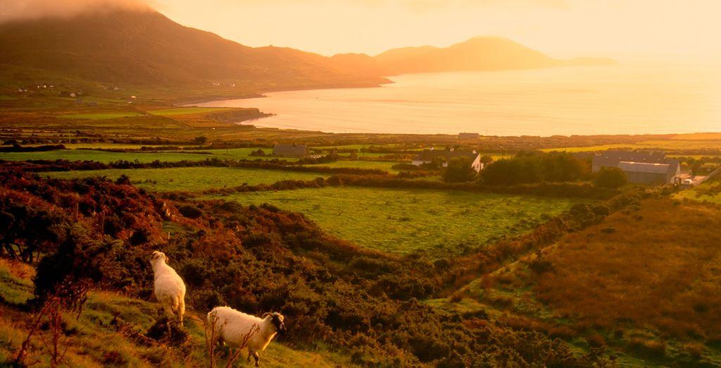 El Anillo de Kerry es una ruta circular que recorre unos 180 kilómetros