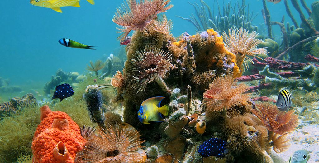 Descubre su hermoso mundo marino