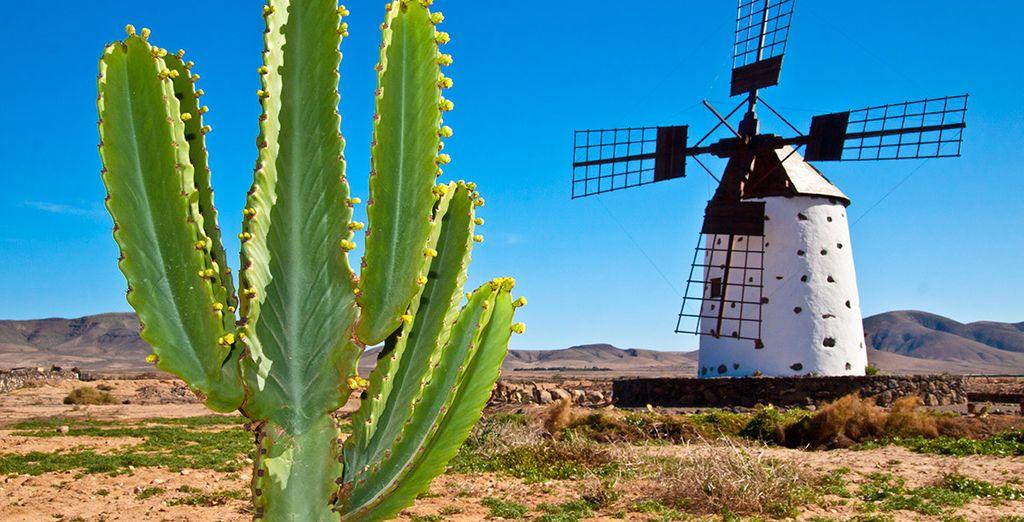 Fuerteventura, una isla que te enamorará