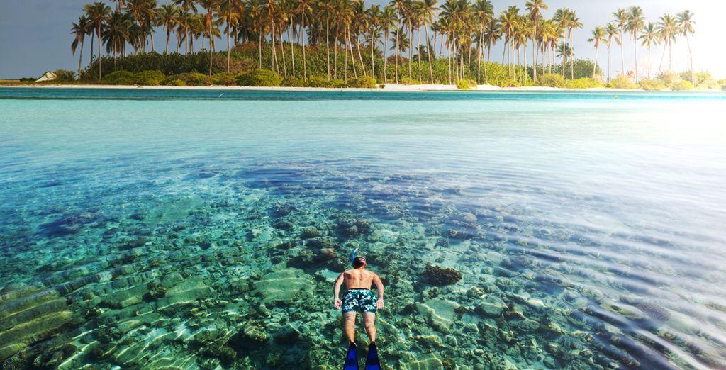 Sumérgete en unas vacaciones perfectas
