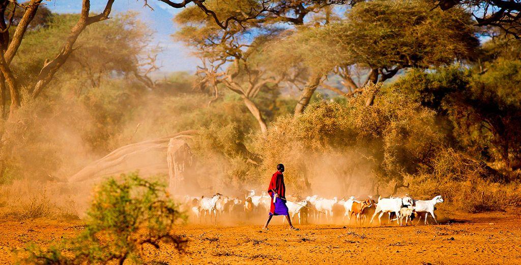 Deja que África te seduzca...