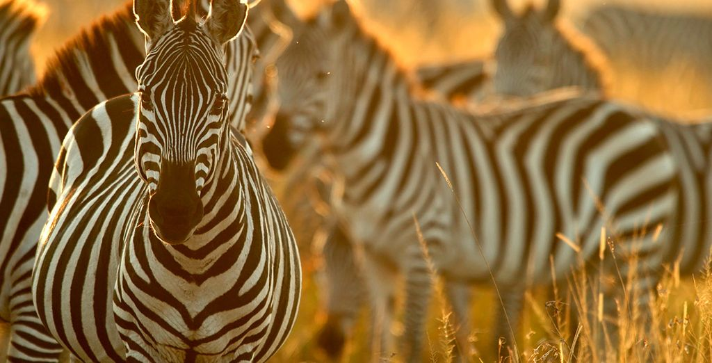 Aprovecha la oportunidad para observar la fauna salvaje en un exótico safari