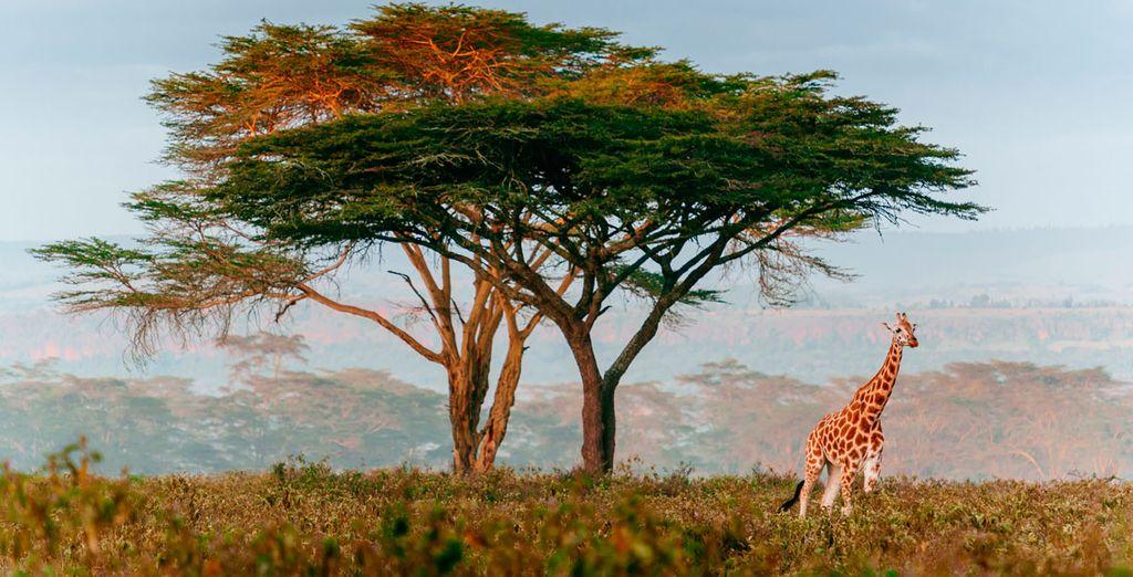 Un viaje inolvidable en el que podrás visitar los parajes más idílicos de Kenia