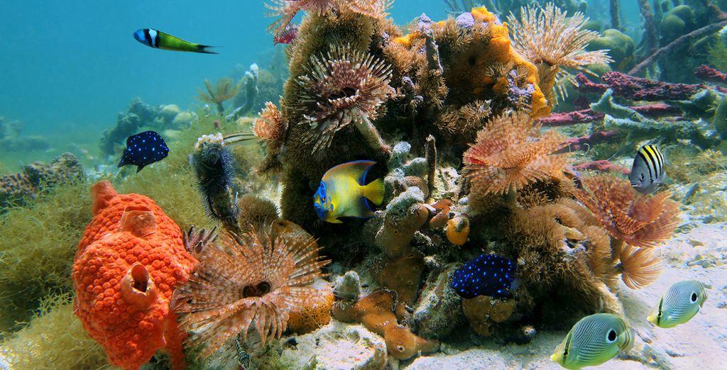 Practica deportes acuáticos en la naturaleza salvaje
