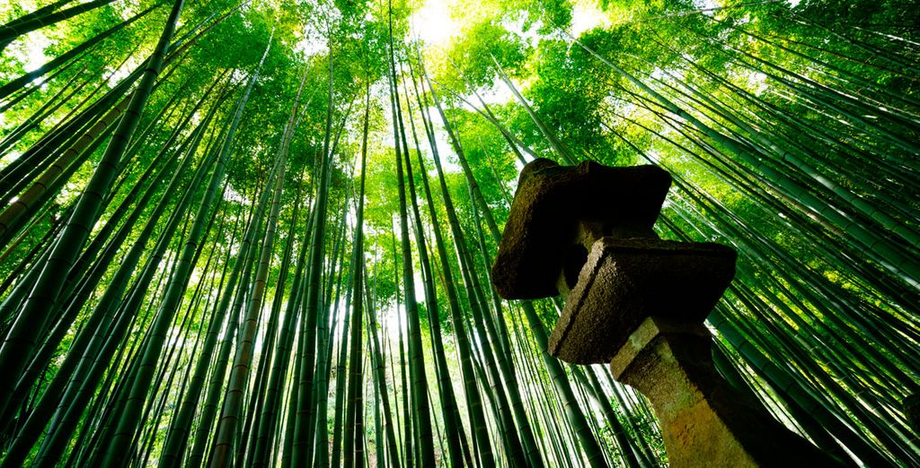 Y déjate envolver por el impresionante bosque de Bambú durante tu visita al Templo Hokokuji