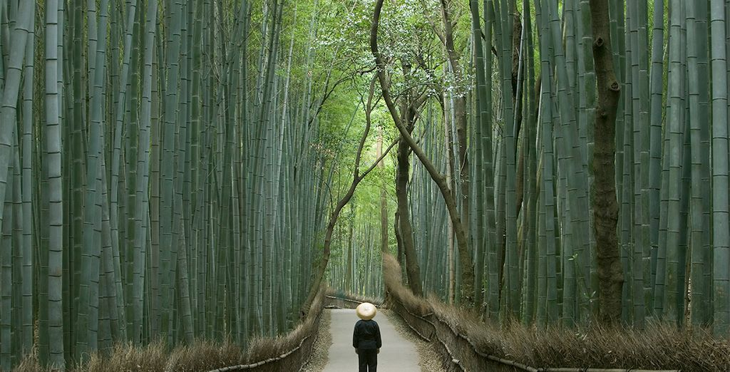 Bosque de bambú en Kyoto