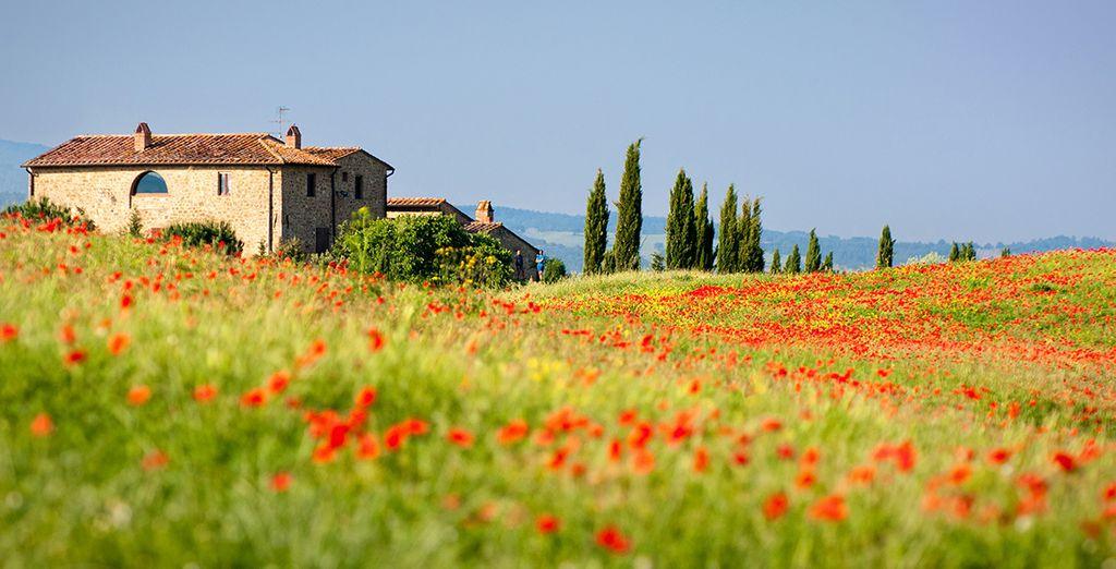 Descubra los paisajes de la Toscana