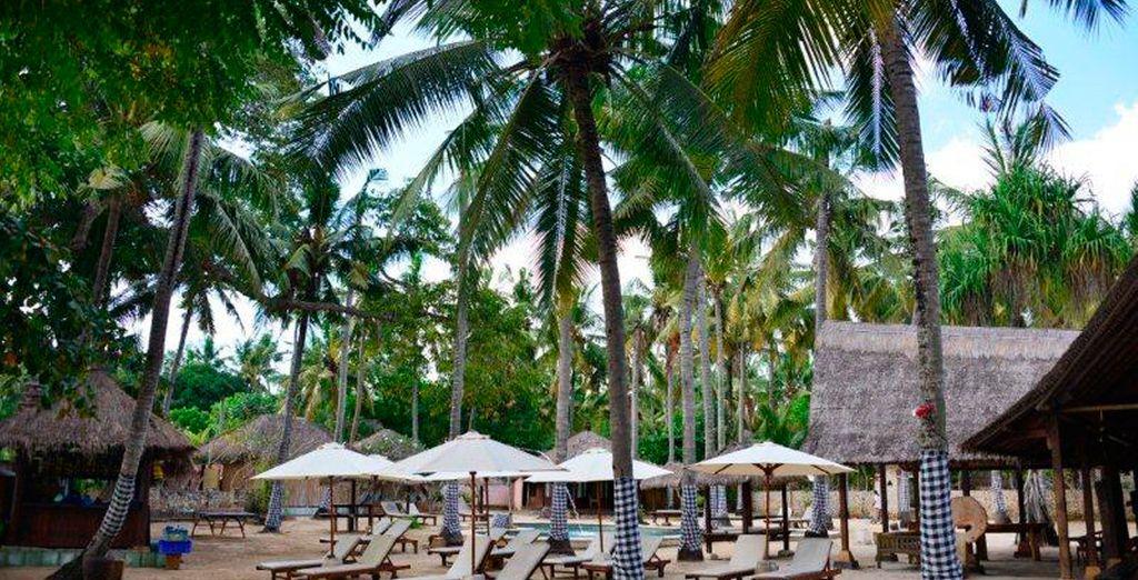 Y para culminar su viaje se hospedará en el Hotel Nusa Bay en la Isla de Lembongan