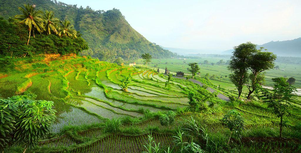 Ubud, un paisaje de naturaleza tropical