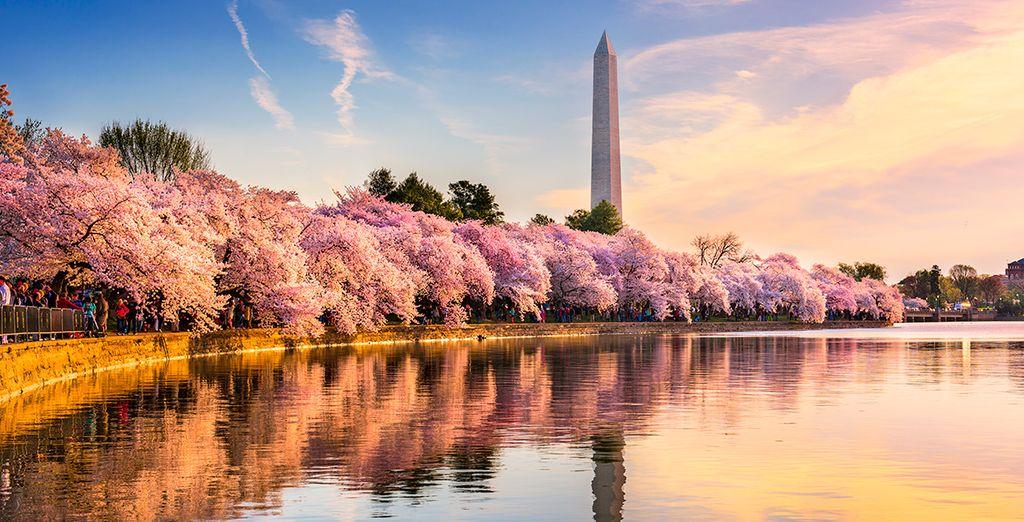 Washington, una ciudad que destaca por su majestuosidad