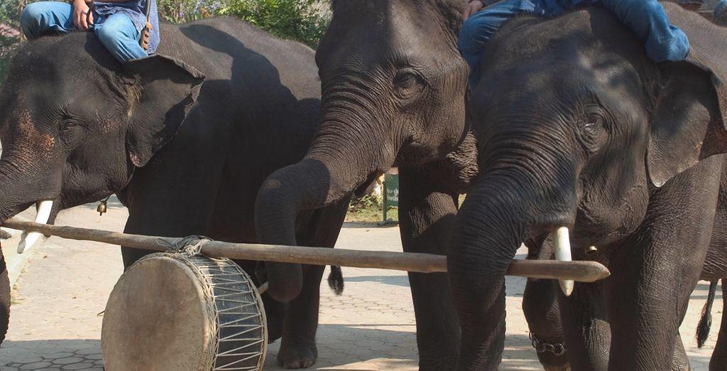 À Chiang Mai, pourquoi ne pas tenter une balade à dos d'éléphants...