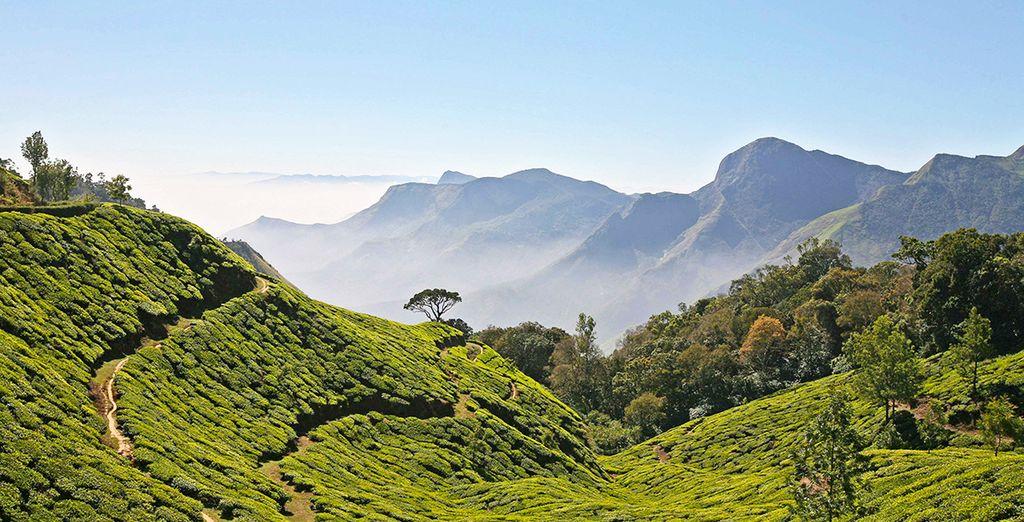Aux plantations de thé et d'épices du Kérala...