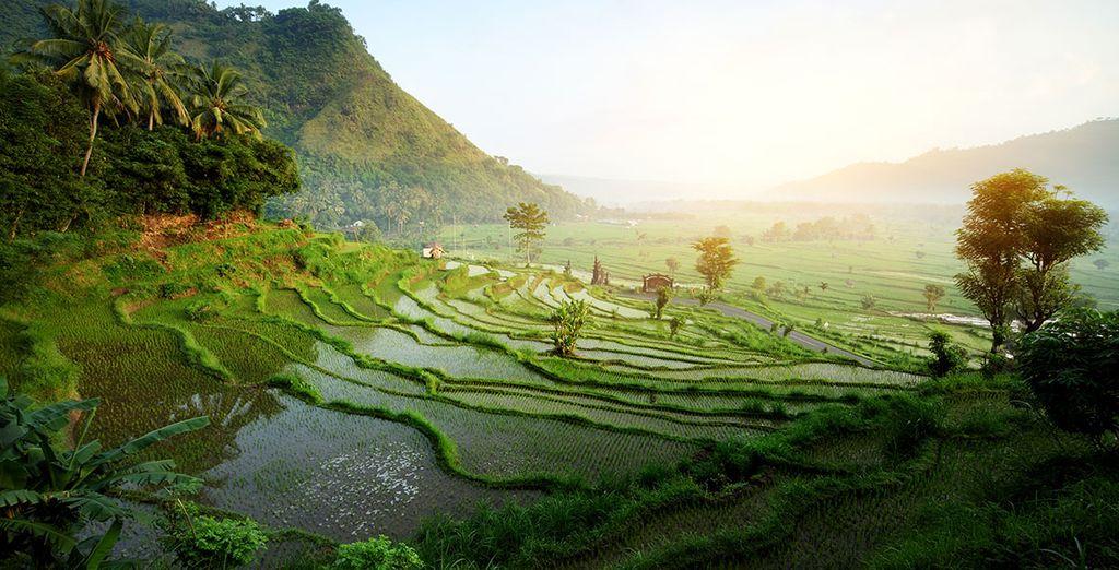 Et partez à la découverte des trésors de Bali