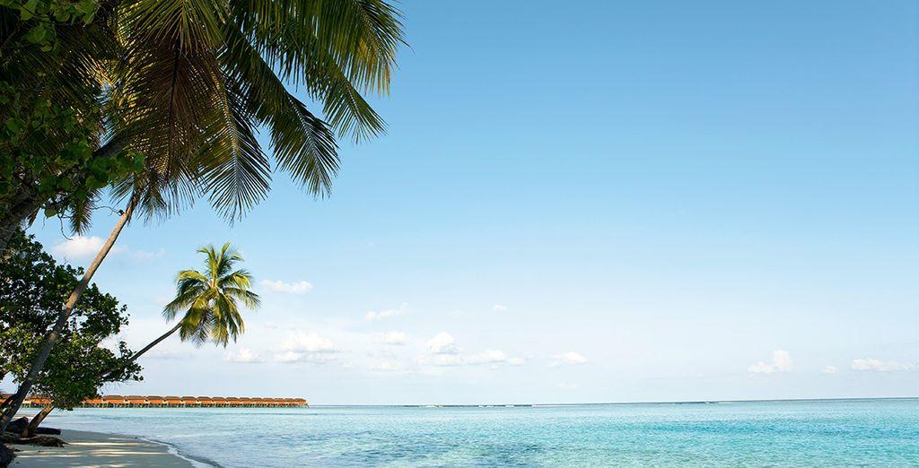 L'atoll Meeru sera votre havre de paix