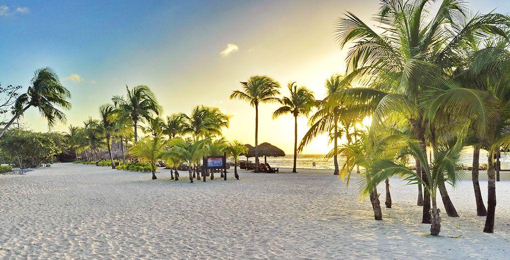 Les plus belles plages de Cozumel vous attendent !