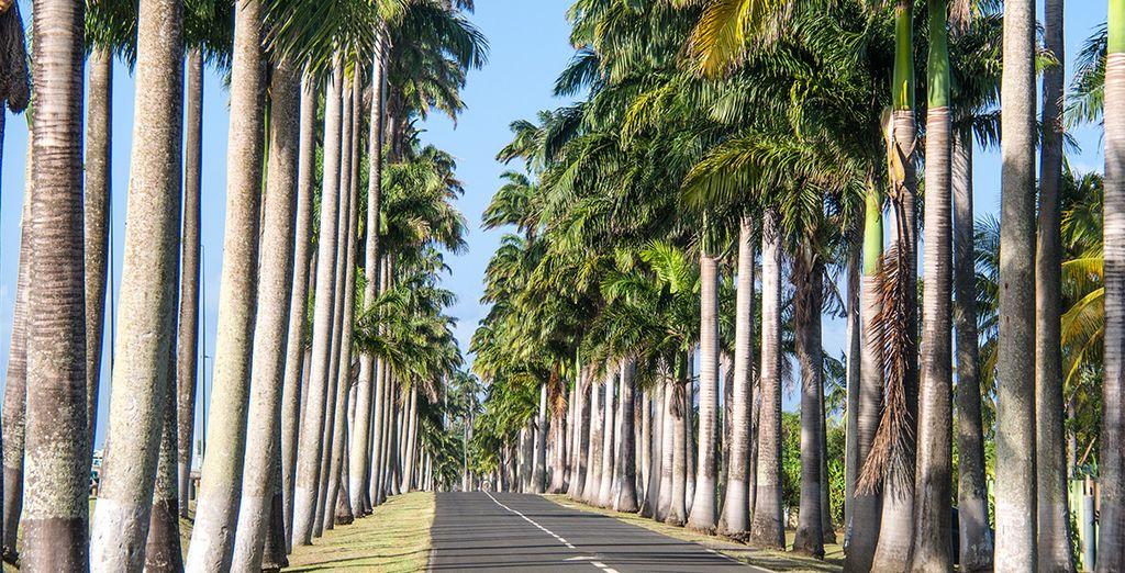 Avant de parcourir les routes de l'île au volant de votre voiture de location, en option et en supplément