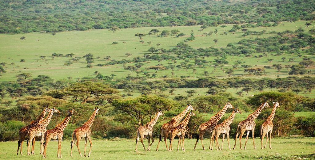Choisissez nos offres avec safari pour un séjour riche en émotions... vous allez découvrir une nature sauvage