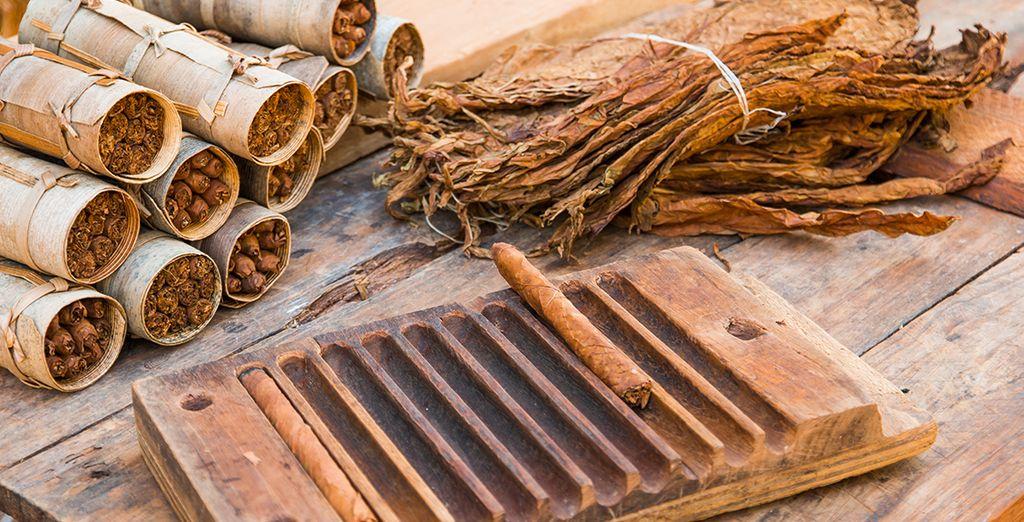 Offrez-vous une excursion en option pour en savoir plus sur la culture du tabac