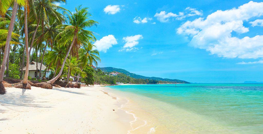 Dans le cadre idyllique de l'île de Koh Samui en Thaïlande