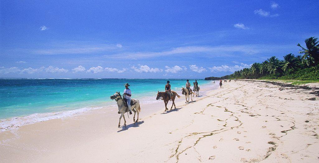 Les plages de Martinique sont à vous