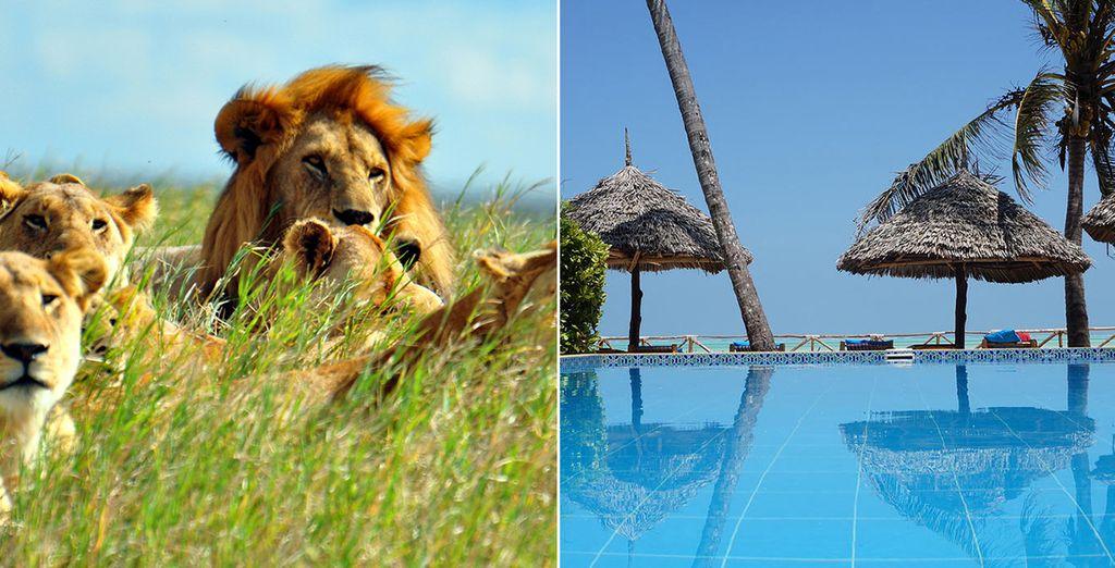Nous vous avions promis une formidable aventure ? - Safari Karibuni Tanzanie et Extension Zanzibar en 8 jours et 7 nuits ou 12 jours et 11 nuits Arusha