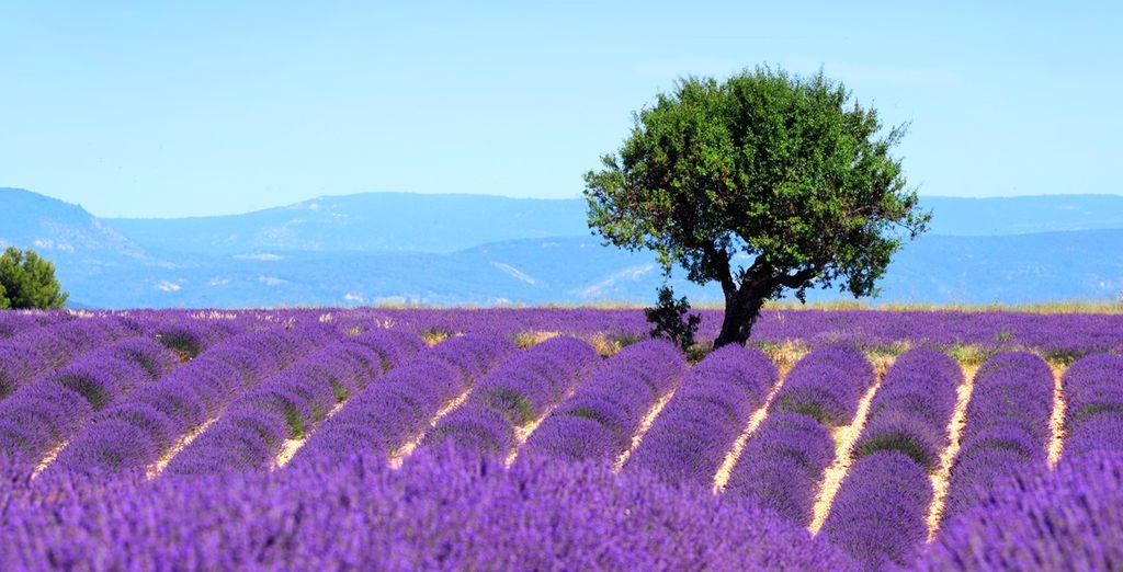 À bientôt en Provence !